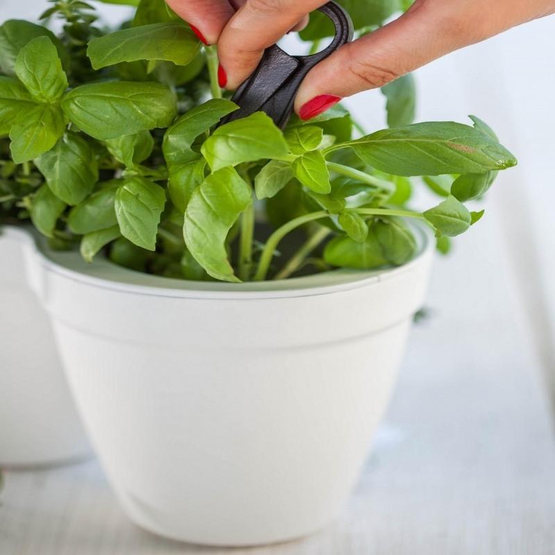 ghiveci-triplu-alb-keter-ivy-herbs-25-l (2)
