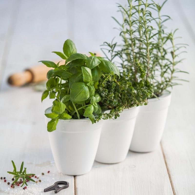 ghiveci-triplu-alb-keter-ivy-herbs-25-l